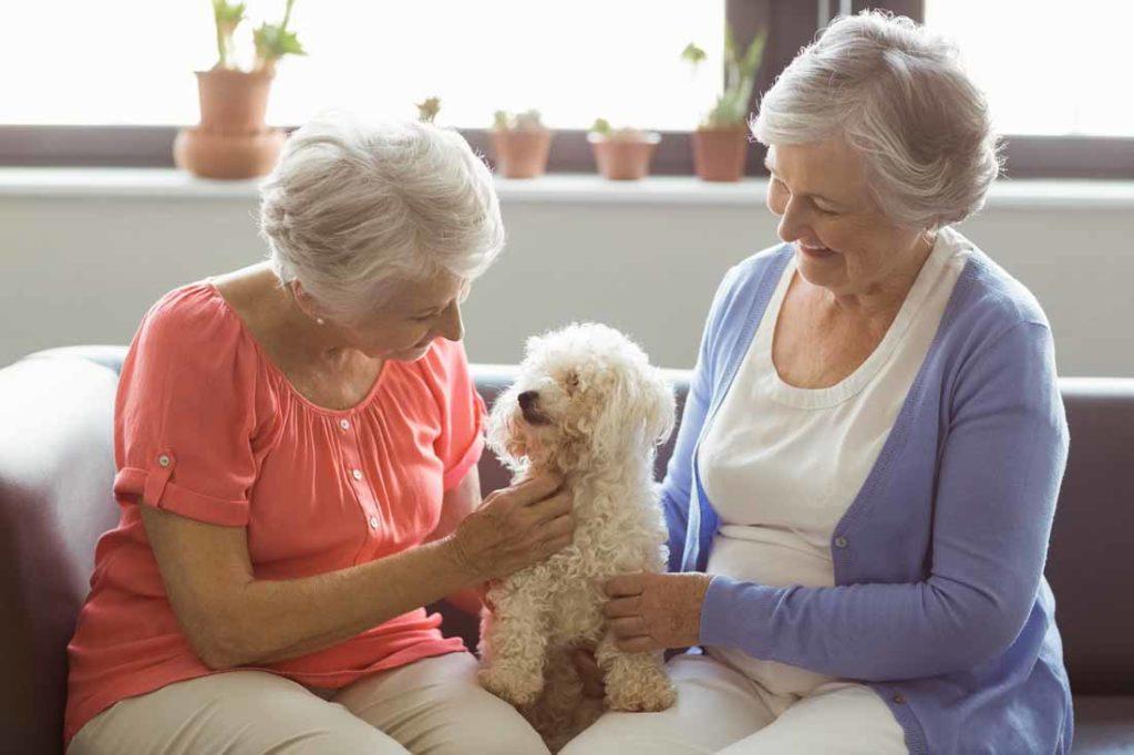 companionship home care trustontap